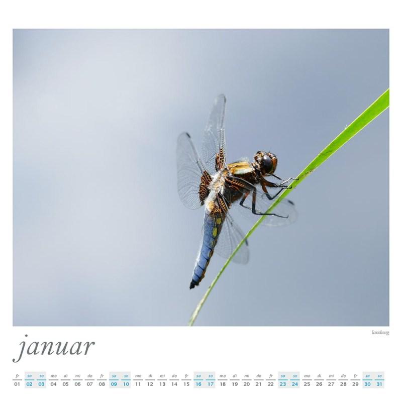 Plescher & Schachtschabel Wandkalender 2021