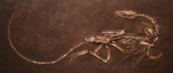Thousands of Coelophysis fossils found at Ghost Ranch. Death by drowning.