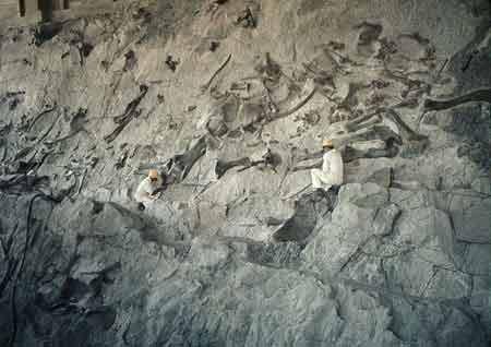 Mountain of bones: Dinosaur National Monument - USA