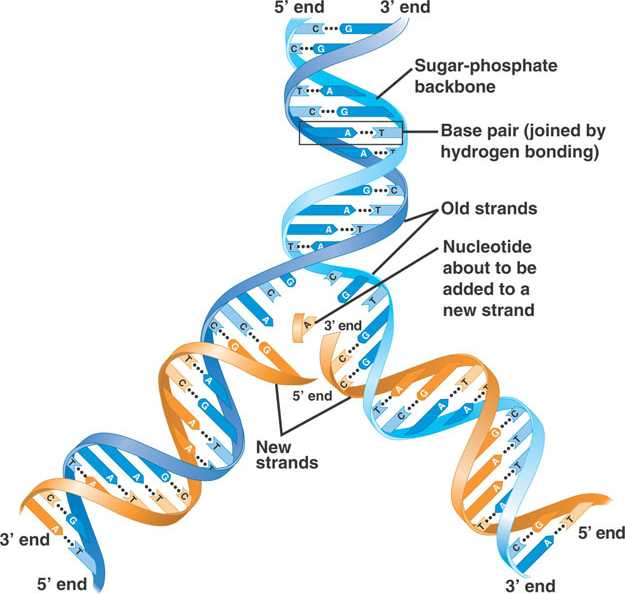 Blueprints for living creation vs evolution blog dna evidence of replicating the blueprint for life malvernweather Choice Image