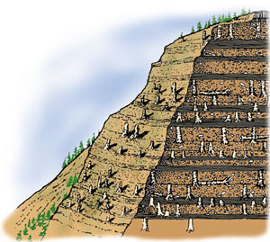 Yellowstone reconstruction.  Multiple forests or one gigantic flood, which laid down these sedimentary rock systems?