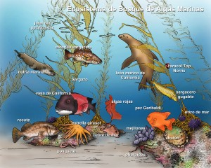 Marine ecosystems.