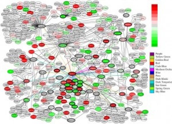 Proteins interact with proteins interact with DNA interacts with RNA interacts with RNA interacts with proteins interact with RNA interacts with DNA interacts with.... ad infinitum!