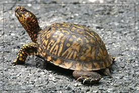Turtles evolved from turtles which evolved from turtles which evolved from turtles which....