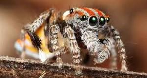 Spider eyes.
