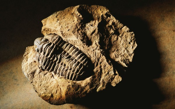 an extinct life form: the trilobite.