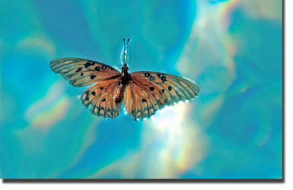 más tarde, la mariposa se posó sobre un lago.