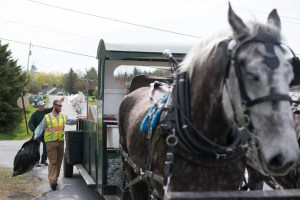 In this May 5, 2015 photo, Patrick Palmer, left, and Nick Hammond toss bags of refuse into a horse-drawn garbage collection wagon in Middlebury, Vt. Palmer's horses have been a common sight along the streets of the village of Bristol, Vt., for 18 years. Now he is training a younger crew, including Hammond, to collect trash with a team of draft horses in the busier college village of Middlebury. (AP Photo/Andy Duback)