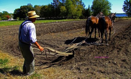 Life Lessons By Doug Harrell is a plowing lesson for all of us.