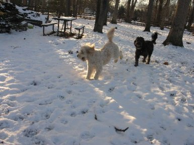 Caya_and_snow