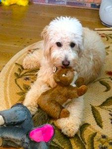 Murfee-Huffstetler---dory-x-boomer-pup
