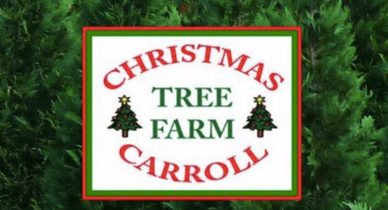 Christmas Carroll Tree Farm