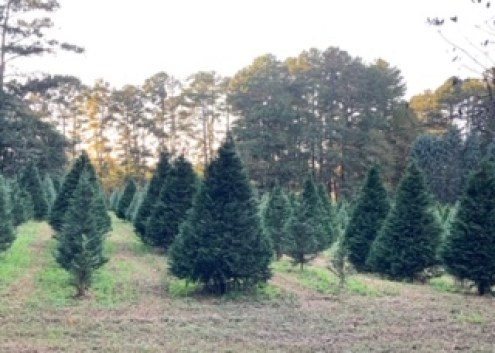 Coker Tree Farm