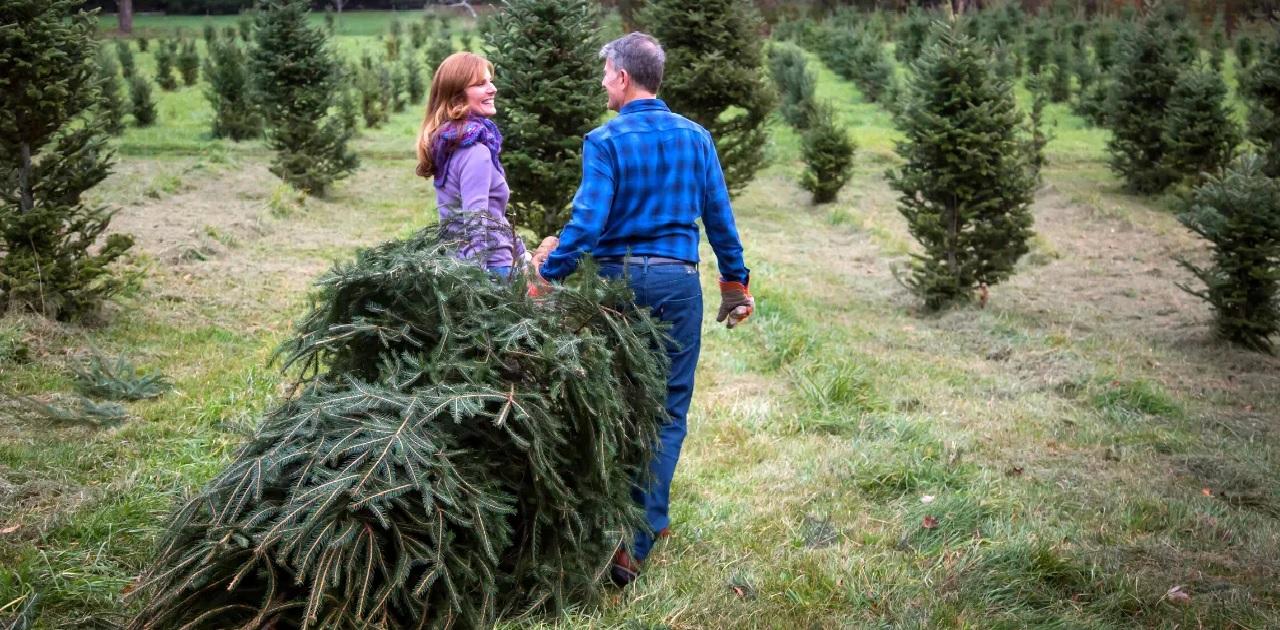 North Georgia Christmas Tree Farms