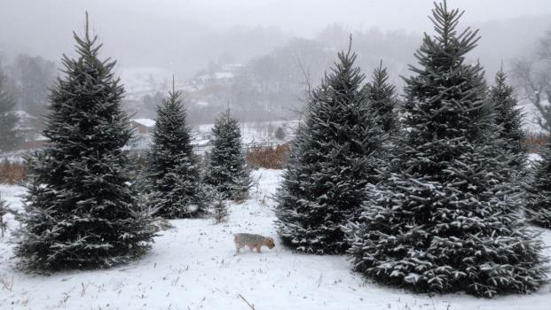 Smoky Mountain Tree Farm