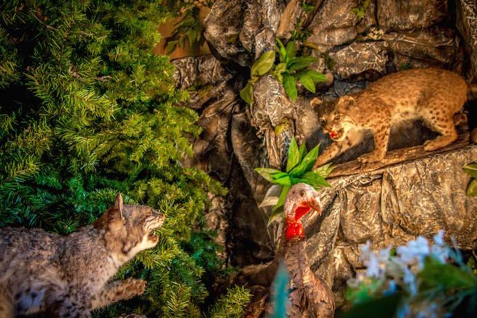NC Wildlife Taxidermy Display at Emerald Village in Little Switzerland NC