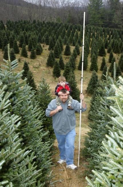 Choose the Family Tree, , courtesy Explore Boone : Watauga Co. TDA