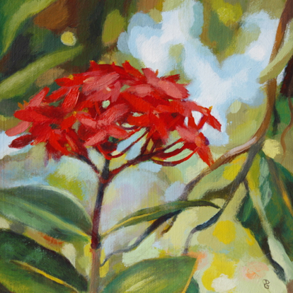 "Red Ixora, 6""x6"", acrylic on boaard, © 2014 Donna Grandin."