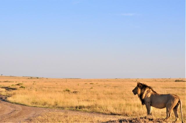ケニアの大地