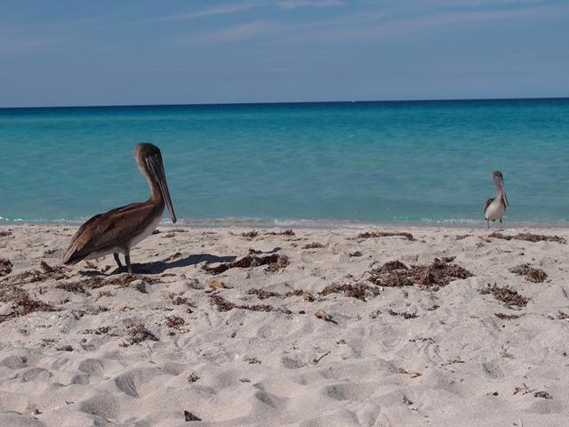 Varadero beach, Cuba, Blue Sky and Wine