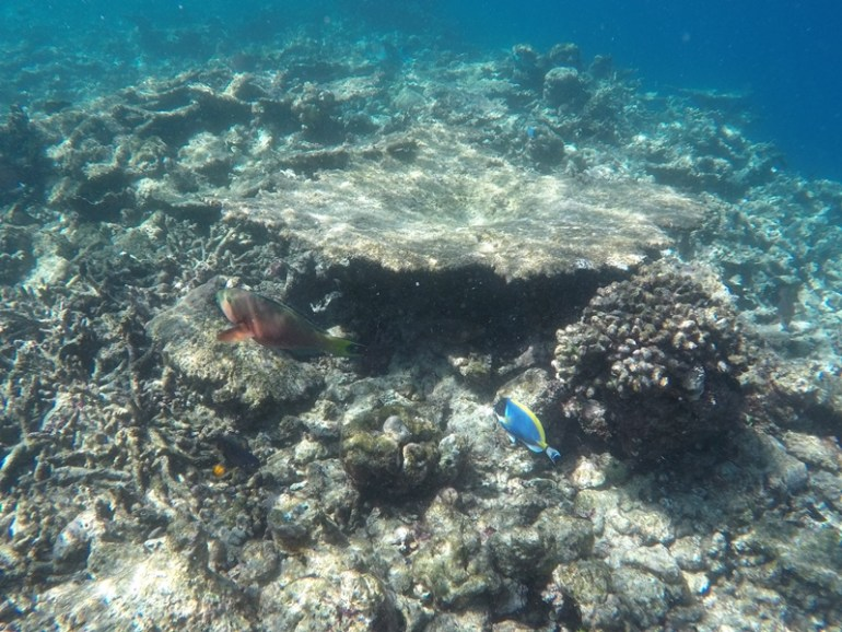 Diving, sandbank half day tour from huraa, Maldives, Blue Sky and Wine