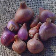 What is a  shallot?