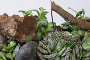 pflanzen_und_gefässe_gruen_braun_holz