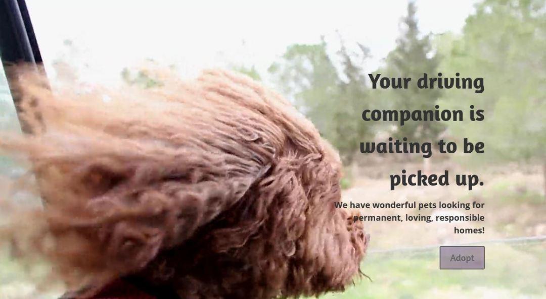 Whatcom Humane Society Website designed by Blue Tiger Studio