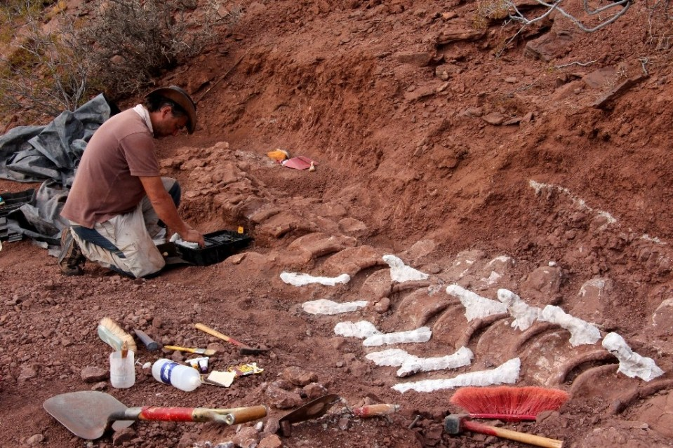 Handout picture released on January 20, 2021 by the CTyS-UNLaM Science Outreach Agency showing a palaeontologist during an excavation in which 98 million-year-old fossils were found, at the Candeleros Formation in the Neuquen River Valley, Argentina. - JOSE LUIS CARBALLIDO / ©AFP