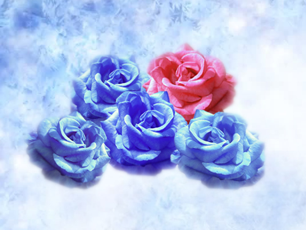 A garland of dreamlike blue winter roses