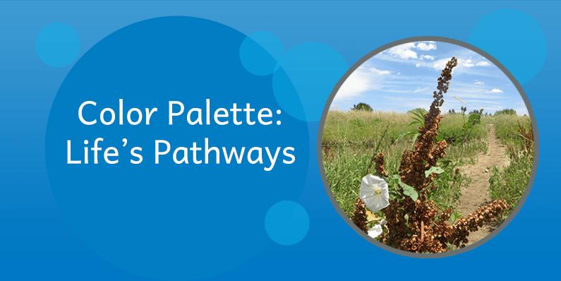 Color Palette: Life's Pathways