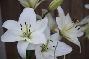 flower-980689_1280