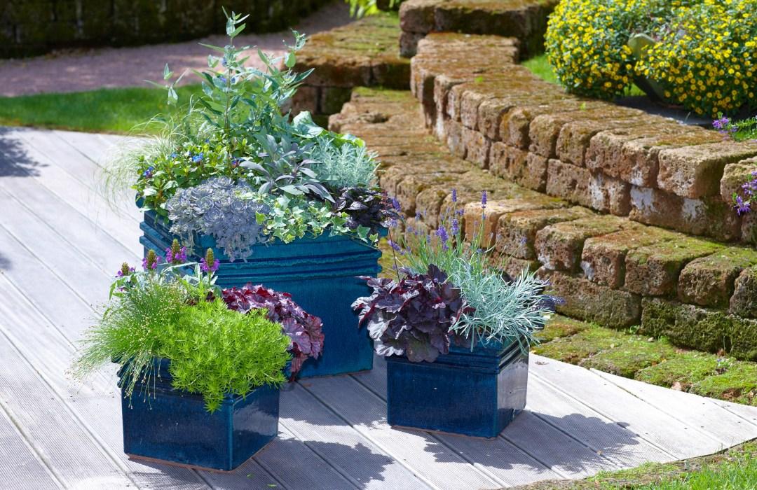 Die Gruppe Kübel in Blau unterstreicht die Bepflanzung aus blau-violetten Blüten und silbrigen Kräutern. Schöne Akzente setzen dunkle und frischgrüne Blattschmuckpflanzen. (Bildnachweis: GMH/FGJ)