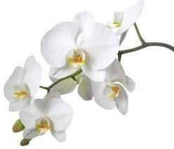 Blumenhaus Inge