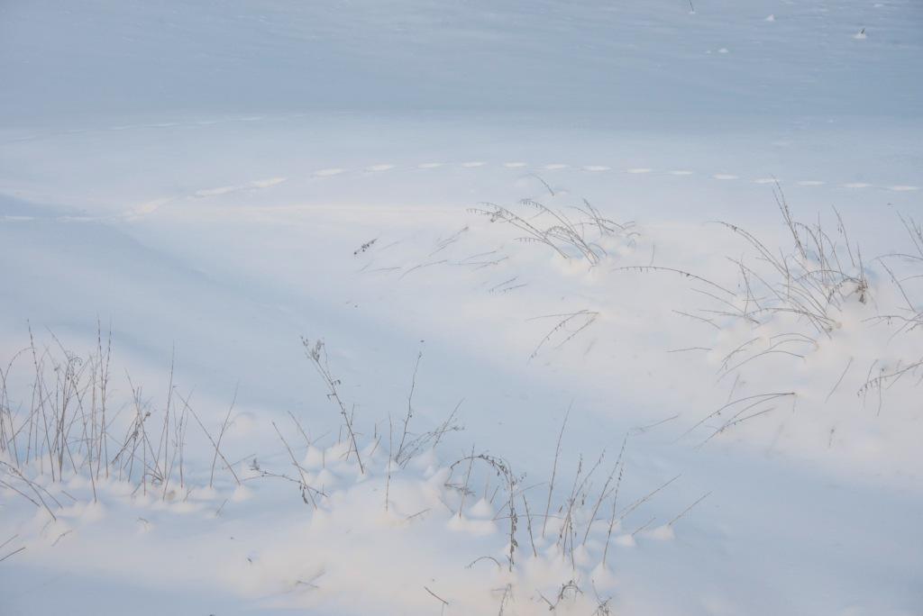 Winterstimmung-Postkarte_303