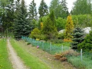 Питомник декоративных деревьев и кустарников - въезд