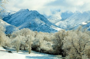 Mountains, Trees and Snow | Blurbomat.com