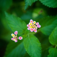 Small Flowers - Destin, Florida | Blurbomat.com