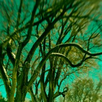 Tangly Branches | Blurbomat.com