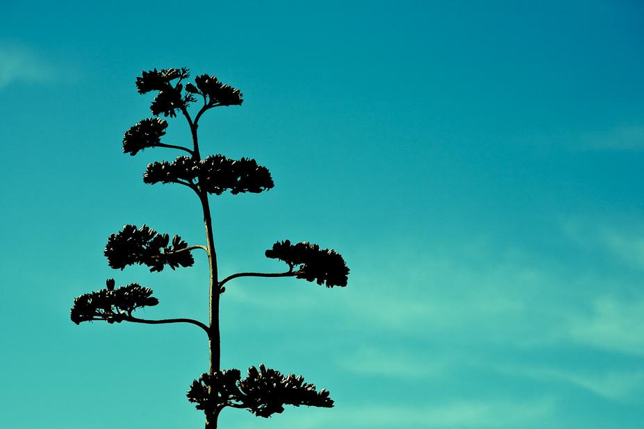 Starglemorph Tree