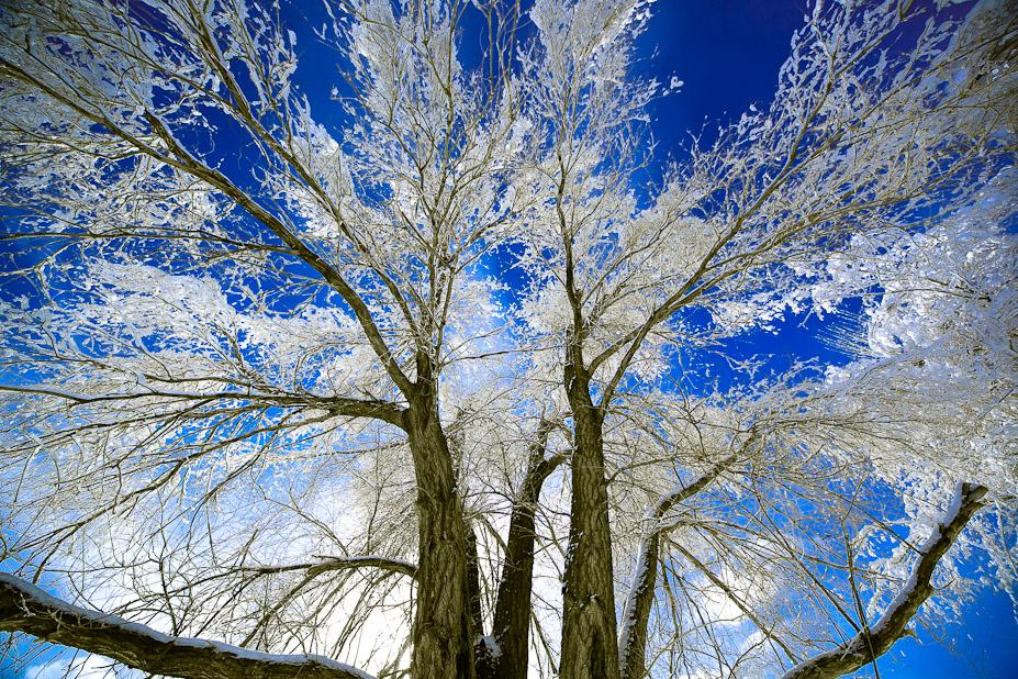 Wide Tree