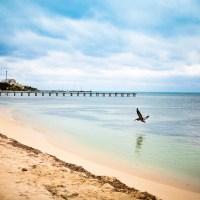 Skimming Gull - Isla Mujeres | Blurbomat.com