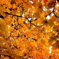 Canopy | Blurbomat.com