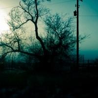 Grasping for Sun | Blurbomat.com