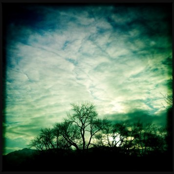 Hipstamatic Trees 2