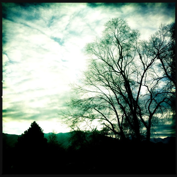 Hipstamatic Trees 6
