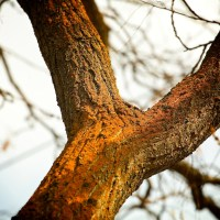 Crotchy - tree limbs | Blurbomat.com