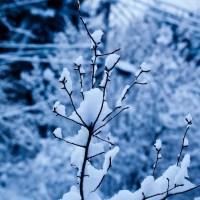 Twiglets | Blurbomat.com