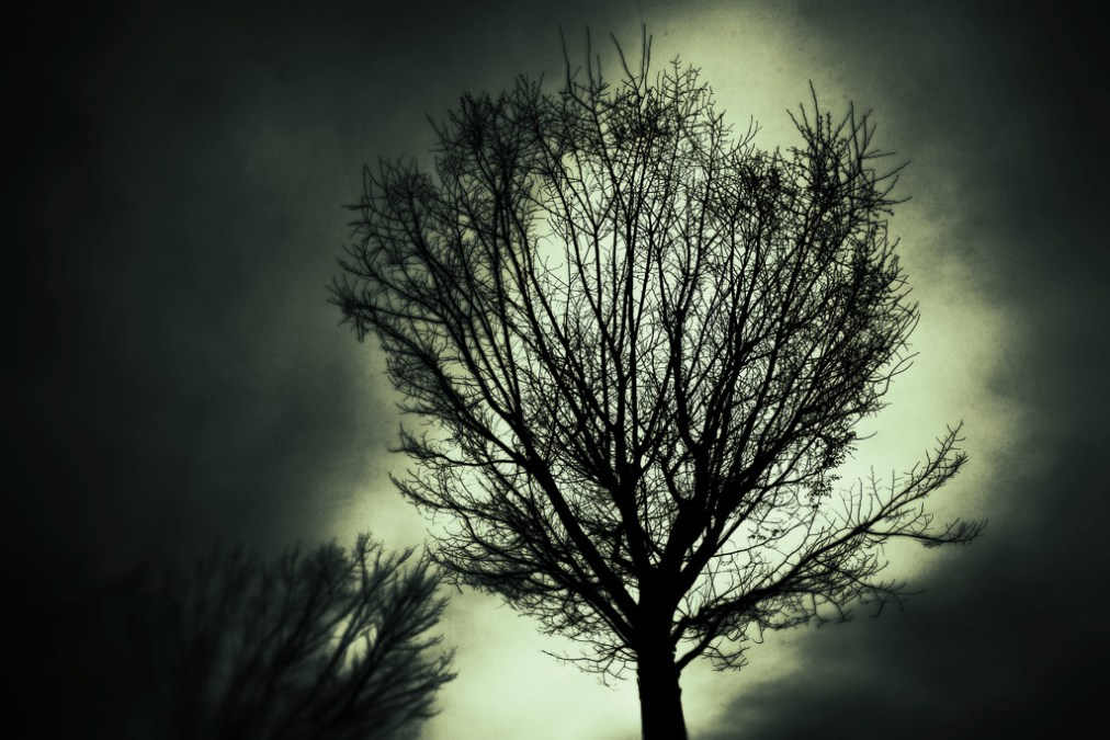Yet Another Bare Tree