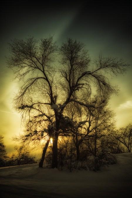 Baroque Tree Silhouette
